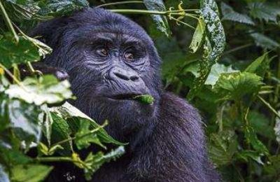 La biodiversité mondiale disparaît à grande vitesse