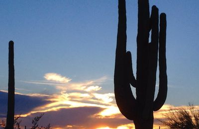 Couchers soleil - Parc national SAGUARO - Arizona