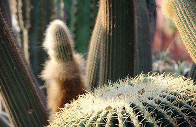 Cactus au Flower dôme - Singapour