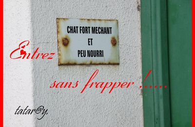 Chapeau !!!... Chat pot ......