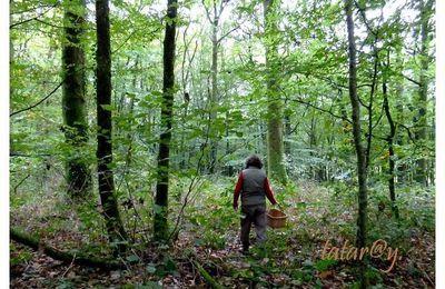Promenade en forêt.   3/3