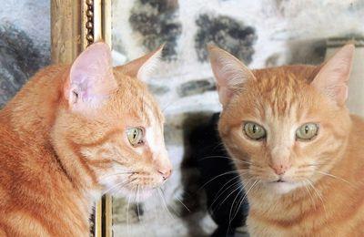 Miroir Caramel