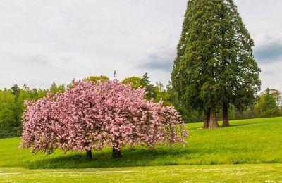 Les couleur du printemps