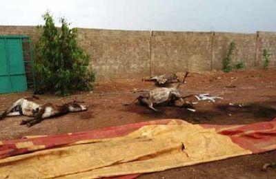 L'arrêt immédiat du génocide des ânes