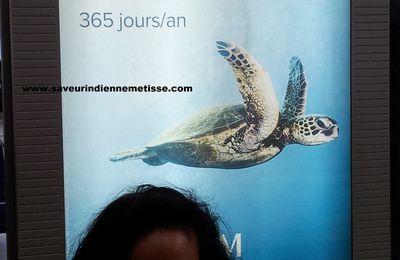 L'envol de la tortue