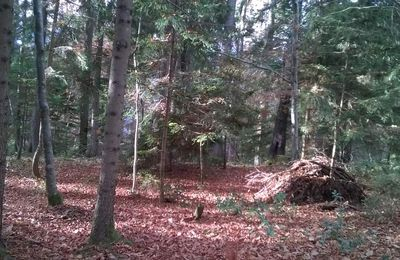 communication avec les arbres, Faverges