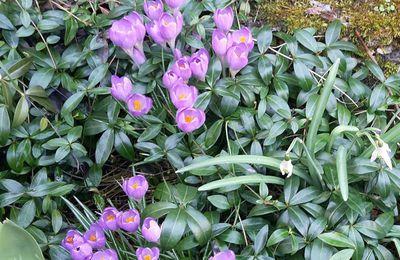 Les signes du printemps qui arrive