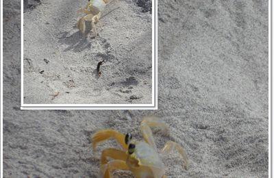 Le Crabe à L'honneur...