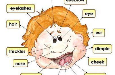 Parts of the face | VOCABULARY