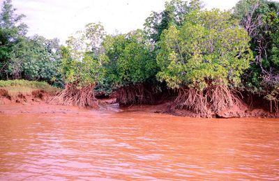 Rouge comme l'embouchure de la Betsiboka