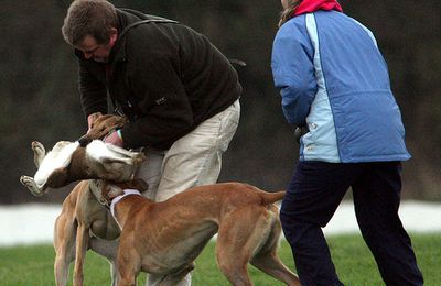 Crucial vote (June 30th) on Bill to Ban Hare coursing in Ireland! Please join plea for abolition...