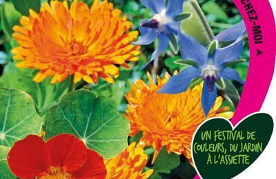 Le semis de fleurs comestibles, premier essai