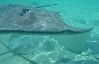 Snorkeling - Moorea