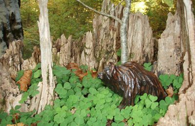 """randonnée """"Ours brun"""" 25/10/2015"""