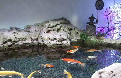 Découvrez l'Aquarium de Paris avec nous !