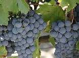 Malbec Producers Southern California