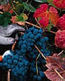 Rose Mourvedre Producers Southern California