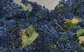 Mourvedre Producers Southern California