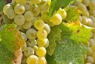 White Sparkling Wine Producers North Coast California