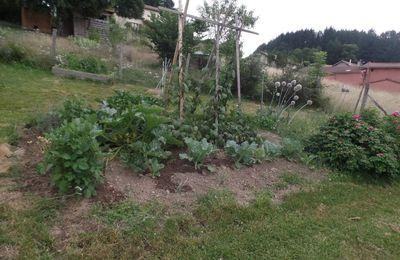 jardin début juillet 2017