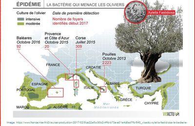 «Une grave crise phytosanitaire: Xylella fastidiosa» sur CulturAgriCulture