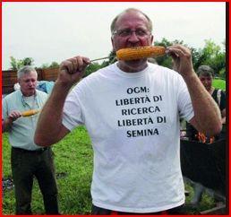 CJUE: le moratoire italien sur la culture d'un maïs GM était illégal et la France est aussi dans l'illégalité