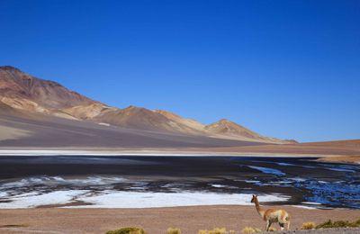 Atacama - Jour 4 : vers le Paso Jama