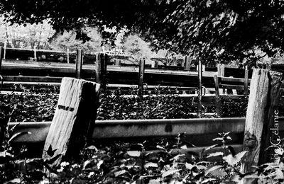 Normandie noir et blanc