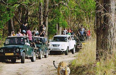 Wildlife Safari in Uttarakhand / Krishna Holidays Rishikesh