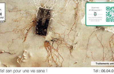 Comment traiter les mérules dans les maisons et les caves