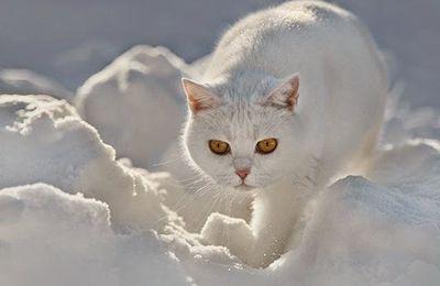 L'hiver pointe le bout de son nez.