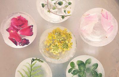 Glaçons de fleurs