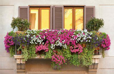 La tendance pour 2016 les fenêtres et balcons fleuris