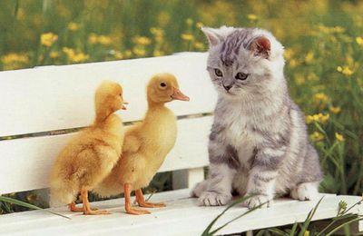 video drole de chat!!! n°2