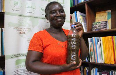 CENTRAFRIQUE / Une étudiante transforme du gingembre en jus pour payer ses études