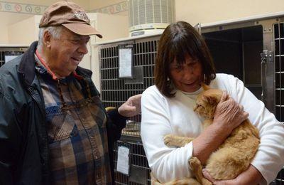 Un chat retrouvé huit ans après sa disparition
