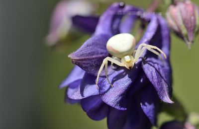 Un jour dans la vie d'une araignée-crabe
