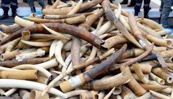 CENTRAFRIQUE : LA FAUNE SERA BIENTOT TOTALEMENT DECIMEE PAR CE CONFLIT PERSISTANT