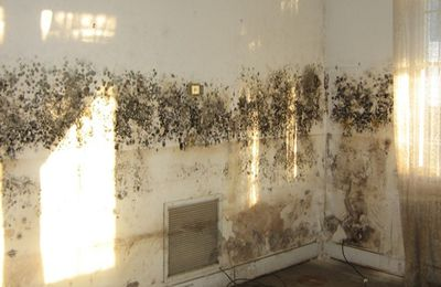 Mold Woes? Reduce the Moisture