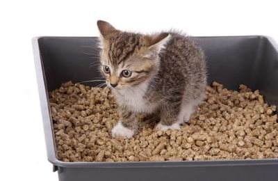Cat Not Using Litter Box? The Best Solution
