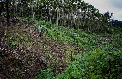 Congo. Exploitation forestière en Afrique . Greenpeace. Video 3 minutes.