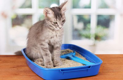 How to teach your cat how to use a litter box