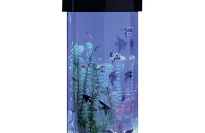 Octagon fish tanks are weird.