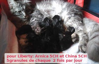 Les petits chats sont nés! les soins de la chatte après la mise bas