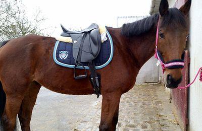 La Fée Sabots: l'équitation au quotidien
