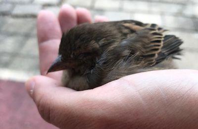 Leçon de vie: petit oiseau