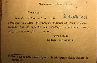 Pensez à récupérer vos poussins le 28 janvier 1957
