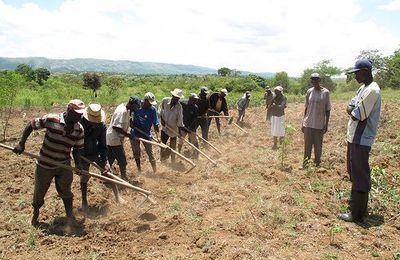 Séisme du 12 janvier 2010, une opportunité ratée de la relance agricole