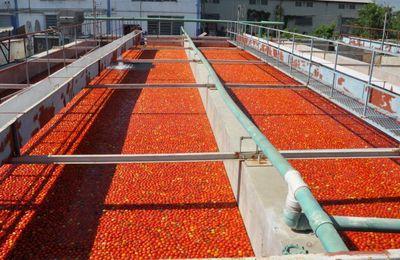 Visite de Jovenel Moise à la société haïtienne d'agro-industrielle (SHAISA S.A)