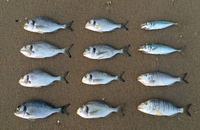 12/08/17 - Une pêche très variée